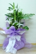 3 Fresh White Lily Stems - Tall Bouquet (L)