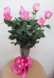 9 Fresh Pink Chinese Roses in Vase (XL)