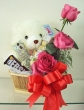 Chocolate Gift Basket with Chinese Roses and Soft Toy (S)