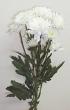 Fresh White Chrysanthemum Stem for Create-A-Bouquet