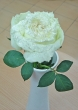 Fresh White Glittered Chinese Rose B to Add To Order