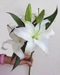 Fresh White Lily Stem for Create-A-Bouquet