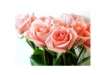 Greeting Card (Printed) - Roses (non-Red) A